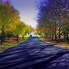 Autumn Drive by Kym Howard