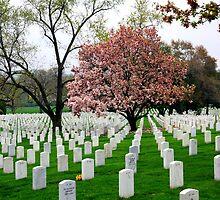 Arlington Cemetery by Freda Sbordoni