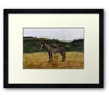 71 - CLYDESDALE HORSE - DAVE EDWARDS - WATERCOLOUR - 1997 Framed Print