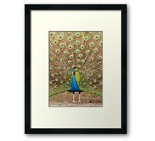 Peacock 2 Framed Print
