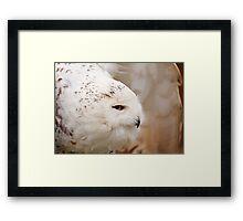 Snowy Owl head profile Framed Print