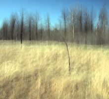The Prairie Breeze by Mitch Labuda