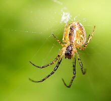 Spider by Sanne Hoekstra