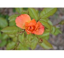 The beautiful little flower in a little town  Photographic Print