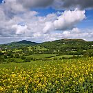 Malvern Hills : Darling May by Angie Latham
