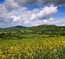 Malvern Hills : Darling May by Angie Latham