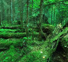 Moss Covered Trunks by Martins Blumbergs