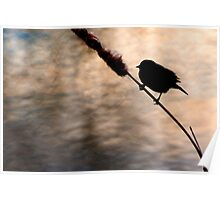 Red-winged Blackbird silhouette on water canvas. Poster