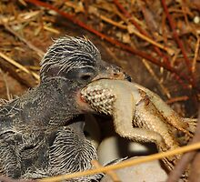 What does a baby roadrunner eat? The whole thing... by Bluecornstudios