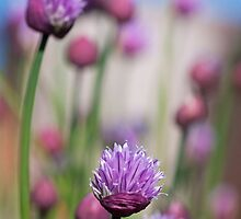 Simply Chives by GillBell