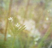 Floweret by BPhotographer