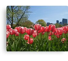 Pink Tulips in The Garden Canvas Print