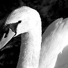 Swan in black and white. by Birgit Van den Broeck