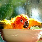 I&#x27;m Singing In The Rain..!!! - Sun Conure - NZ by AndreaEL
