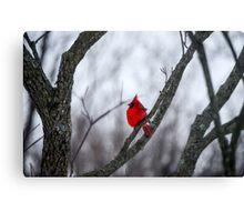 Cardinal In A Snow Storm Canvas Print