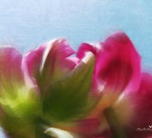 Tulip view by Olga