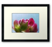 Tulip view Framed Print