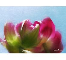 Tulip view Photographic Print