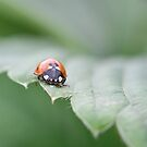 Ladybird by ChromaticTouch