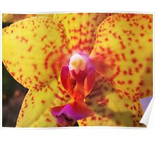 Orchid Collection - 20 Poster