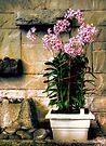 Decorative Flowers by Marcia Rubin