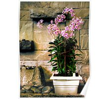Decorative Flowers Poster