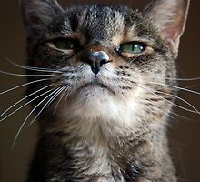 Do I Amuse You?! by jodi payne