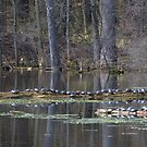 Turtle Bay at Mud Lake by gregsmith