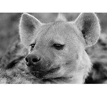 Hyena Profile Photographic Print