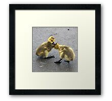 Chick Fight Framed Print