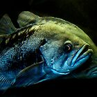 Rockfish by mogue