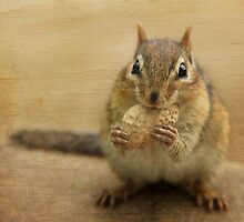 Woody Chippy by Lori Deiter