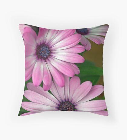 African Pink Daisies Throw Pillow