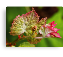 Baby Grape Leaves Canvas Print
