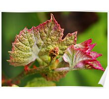 Baby Grape Leaves Poster