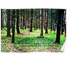 Blanketed Forest Poster