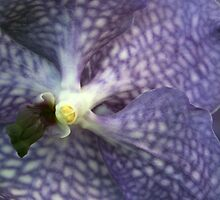 Purple Orchid by chrstnes73