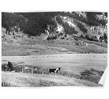 In the gap, Upper Highwood, Montana Poster