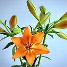 Flower 1 by Denny0976