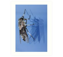 Fly and Window Reflection Art Print