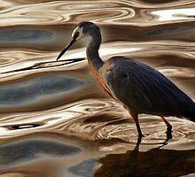 """Wading'' by Barbara Caffell"