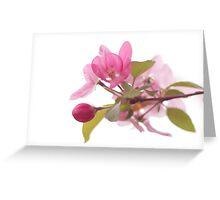 Crabapple in Bloom Greeting Card