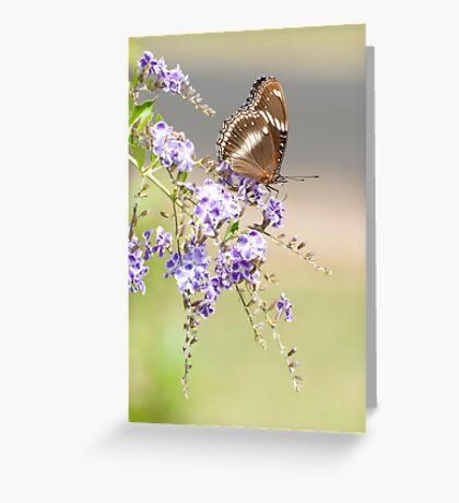Geisha girl - butterfly feeding. Greeting Card
