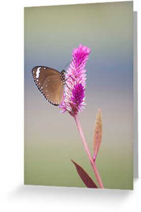 Happy Days - common eggfly butterfly by Jenny Dean