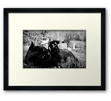 Little Panther Framed Print