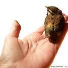 Fledgling Carolina Wren by Maureen Bloesch