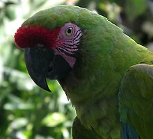 Pretty Boy from Bali Bird Park by chijude