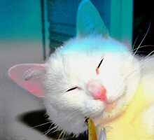 My happy cat by ♥⊱ B. Randi Bailey