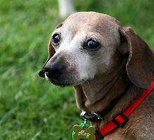 Meg the dachshund by RainbowsEnd