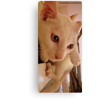 IMPECCABLE HEADSHOTS Canvas Print